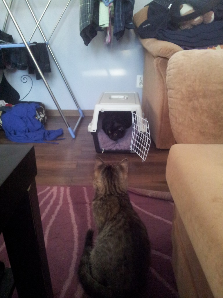 Trudne początki nowej znajomości - Tosia uważnie obserwuje nowego lokatora